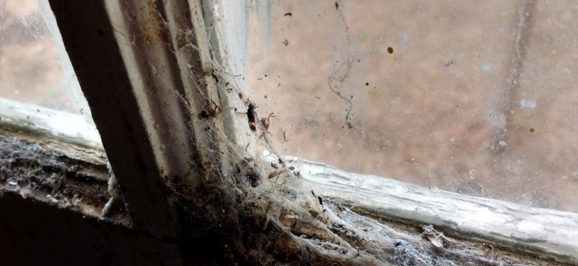 Rotting Window Covered In Cobwebs